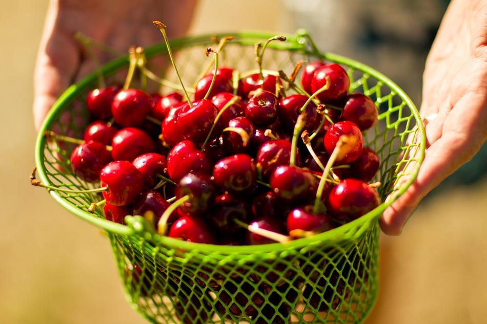 gct_flathead-cherries-hands-2