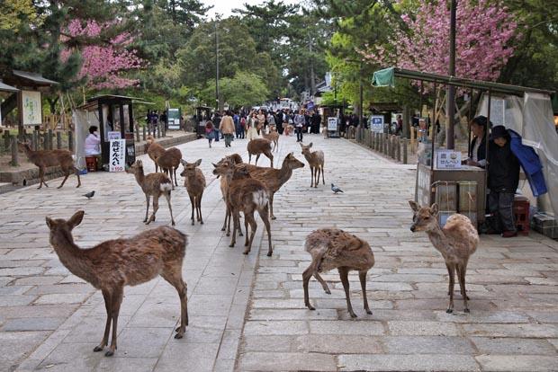 deer, animals
